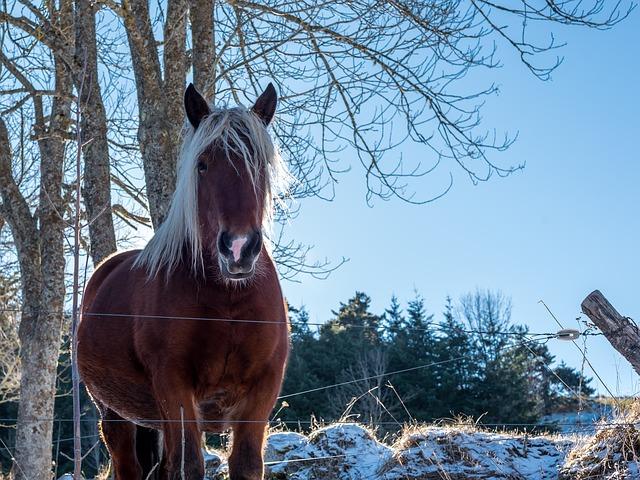 Reitoverall Karlslund im Test. Nicht nur Pferde mögen es warm.