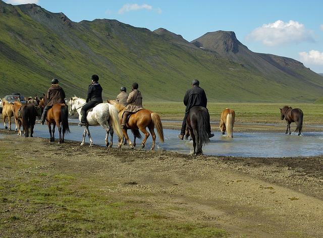 Island - Viele Reiter mit Reitoverall