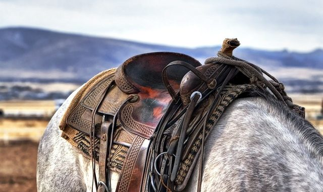 islandpferd sattel - pferd in island mit sattel