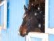 Pferd im Stall während Schneeflocken fallen